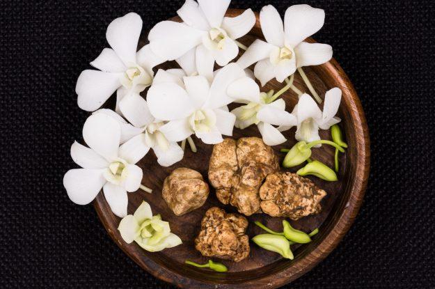 White truffles Still Life
